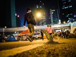 Hong Kong Umbrella Revolution